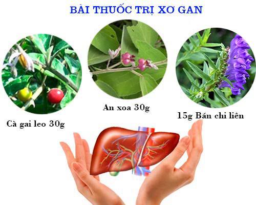 Bài thuốc cây an xoa trị bệnh gan